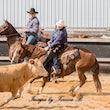 Australian Cutting Horse & Youth Group $12000 Novice - Jackpot Show  Gatton 22/4/17