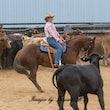 Australian Cutting Horse & Youth Group Open Snaffle Bit GR2 - Jackpot Show Gatton 22/4/17