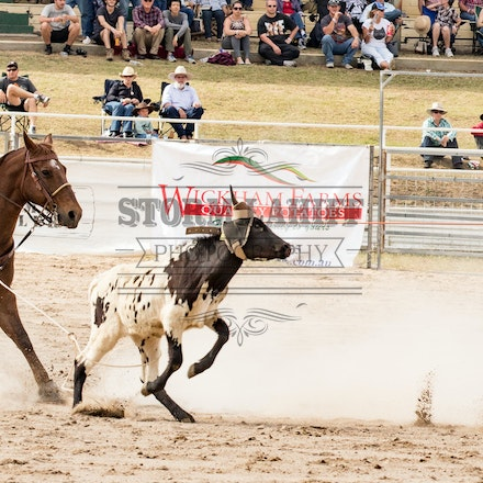 Team Roping Warwick Rodeo & Campdraft Sunday OCT 25th 2015 - 12x36 will be the perfect size to print most of your panoramic prints, some sizes will differ...