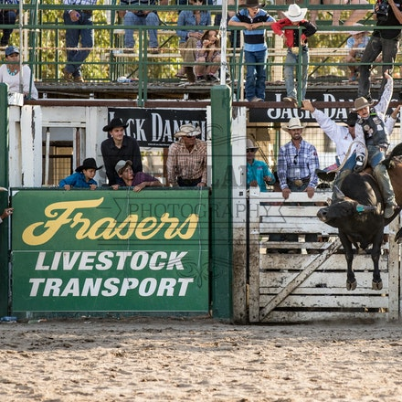 Bull ride Warwick Rodeo and Campdraft Sunday 25th of Oct 2015 APRA - Sunday afternoon bulls