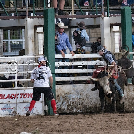 3rd section 2nd divi bull ride Warwick Rodeo and Campdraft 2016 - SAT Warwick Rodeo and Campdraft 2016
