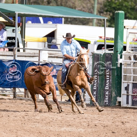 Black Toyota Canning Downs Draft Final SAT 29 OCT 2016 - Warwick Rodeo and Campdraft 2016
