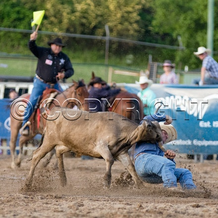 Steer Wrestling SUN 30th OCT 2016 - APRA Finals Warwick Rodeo and Campdraft