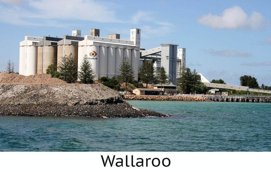 Wallaroo1