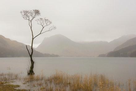 The tree in the rain