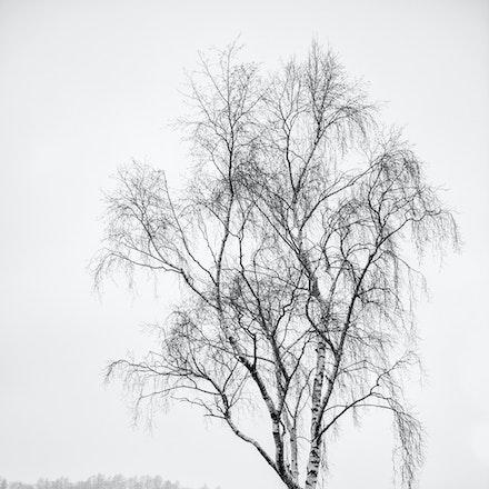 A tree at Hodge Close