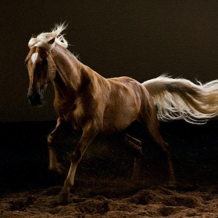 StudioTrend_2016-08-10_Cavalos-1652_oil4
