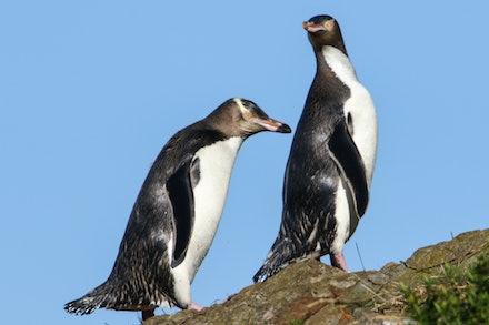 coastal wildlife - New Zealand Wildlife