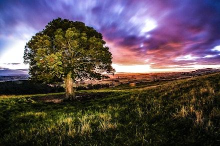 EOS73227 - lonely tree