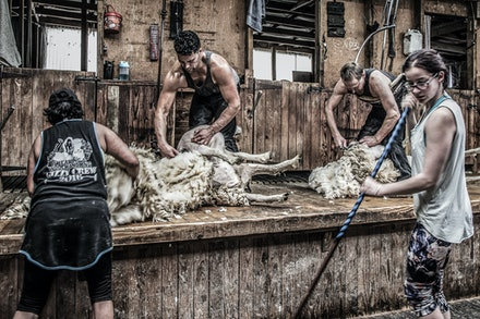 Farm Photos/Shearing