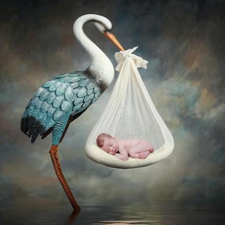 Malakai Stork