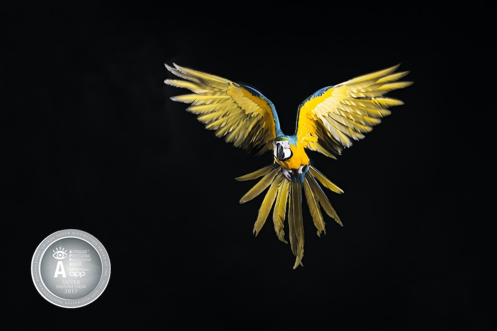 Bird with SilverD medal