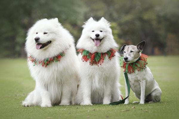 Wag-11 - Dog Photography