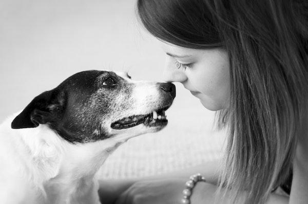 nose dog kisses