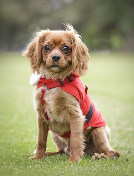 Wag-8 - Dog Photography