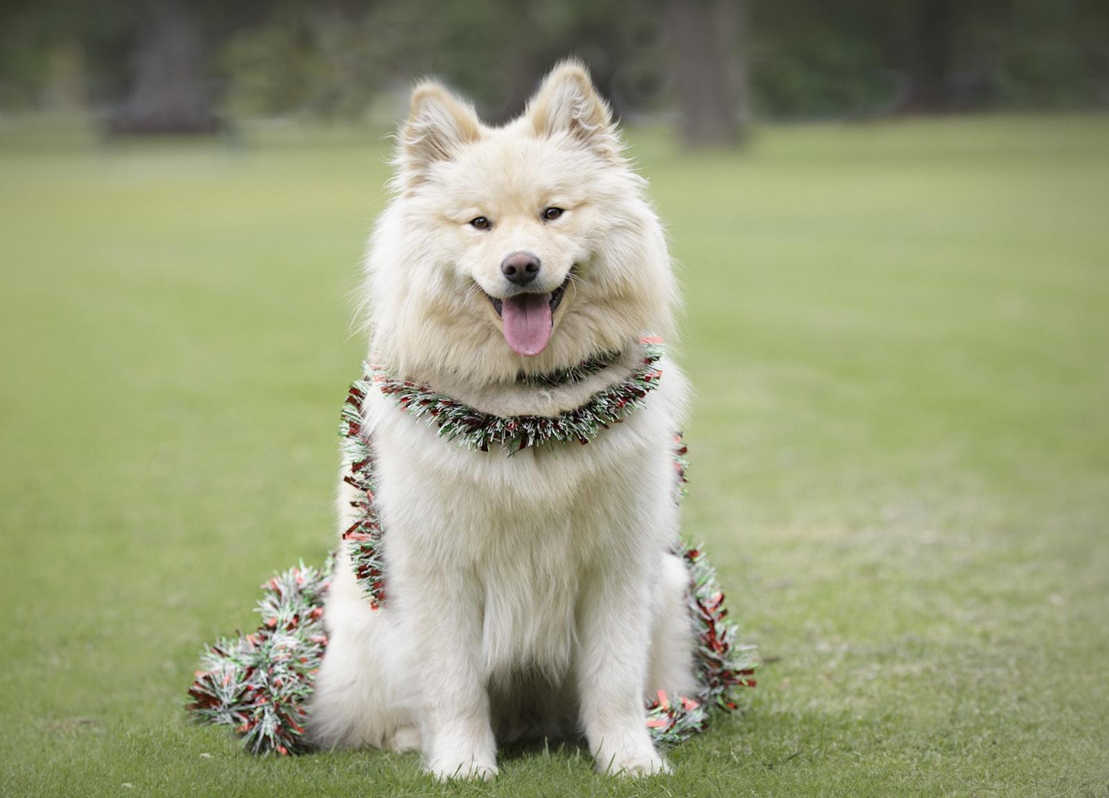 Wag-3 - Dog Photography