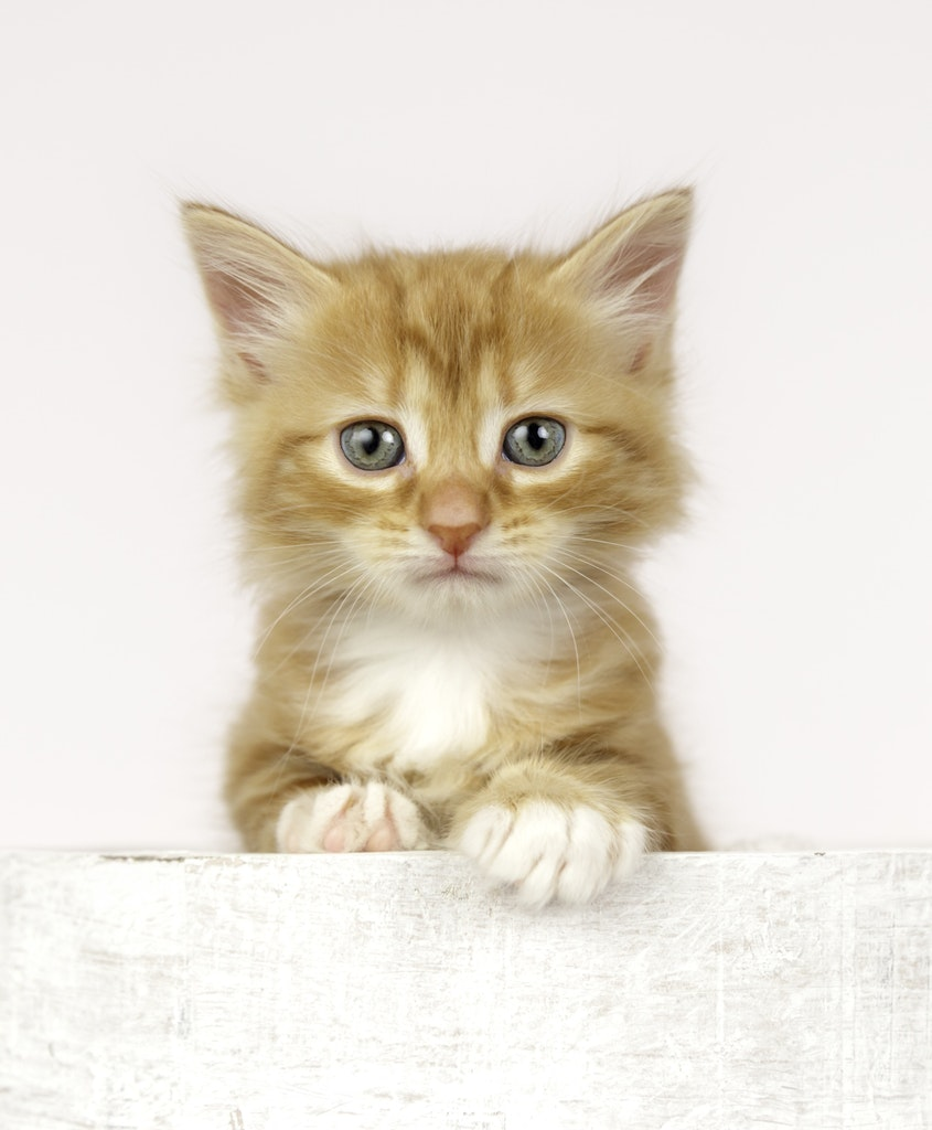 Kitten photography