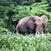 Flower Power- Tarangerie National Park, Tanzania