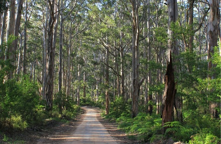 south west - Beautiful forest near Margaret River in south west Australia