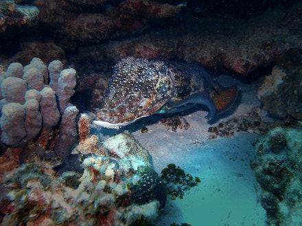 cattlefish high - OLYMPUS DIGITAL CAMERA