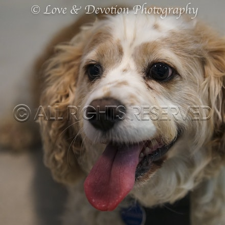 Pet Photography - Pet photography, cats, dogs and any animal that you love. Capture images of the special bond you have for your pets.