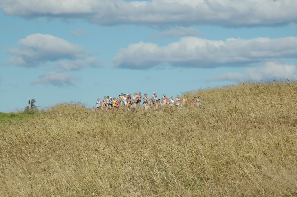Panorama - The open women disappear down a track behind the tall grass at the 2008 NSW Short Course Cross Country Championships at Sydney International...